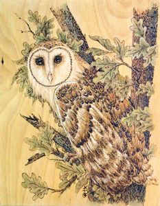 tn_Barn Owl